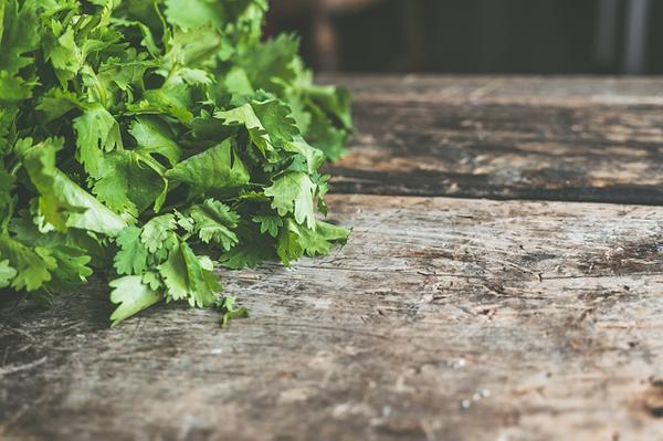 beneficios y usos del cilantro